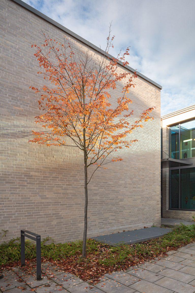 Architekturfotografie für Batimet in Köln St Rochus Herbstbaum